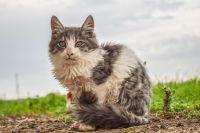 В 2019 году ноябрян чаще кусают бездомные кошки, чем собаки
