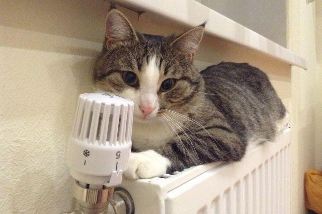 В правительстве местных чиновников обязали снизить тарифы на отопление