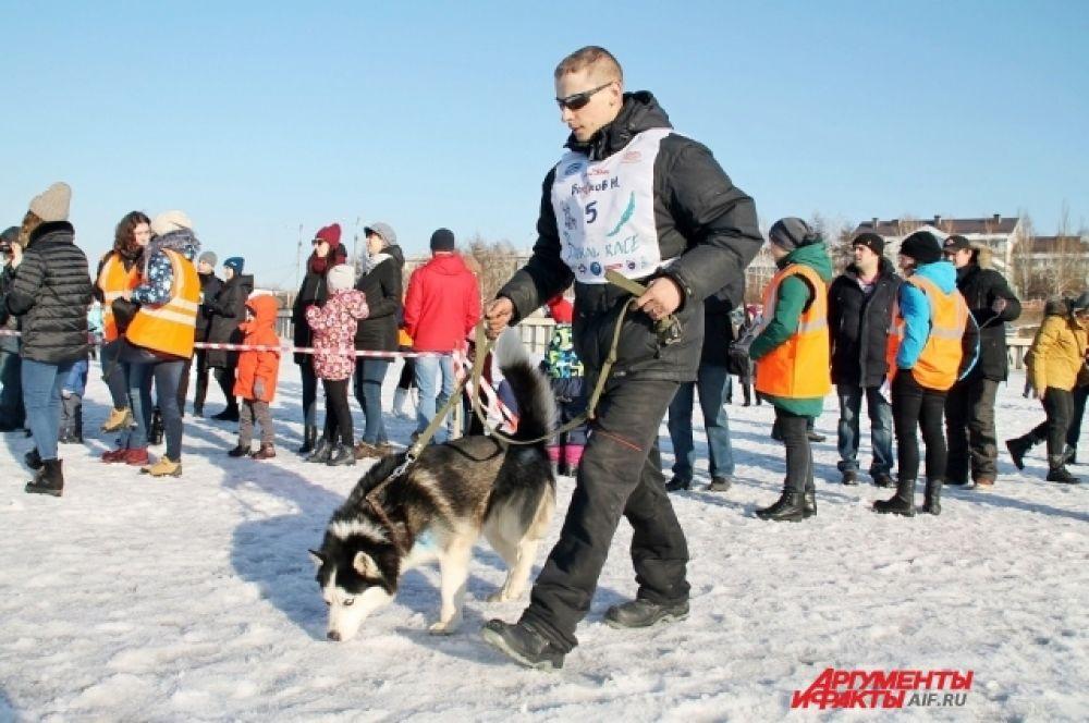 Программой соревнований предусмотрены гонки на 100 и 155 км в двух дисциплинах — «нарты» и «лыжи».