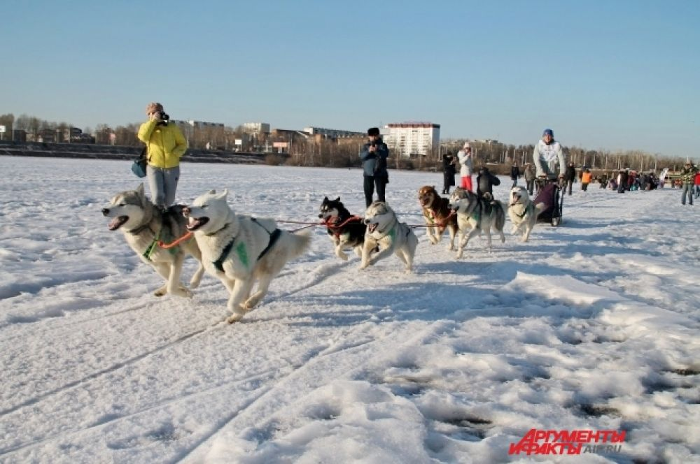 Гонки на собачьих упряжках «Baikal Race» проходят в рамках XVI Международного фестиваля зимних игр на Байкале «Зимниада – 2019» со 2 по 4 марта.
