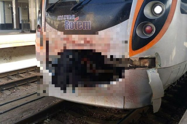 Под Киевом поезд Интерсити врезлася на полном ходу в лося