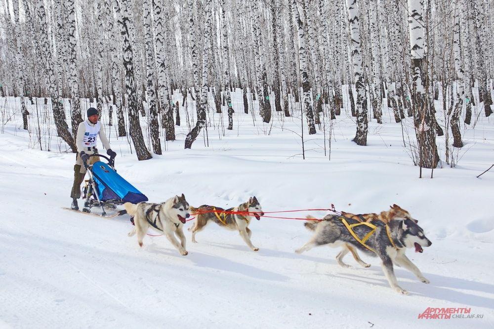 Следующими на дистанцию вышли упряжки из четырёх собак.