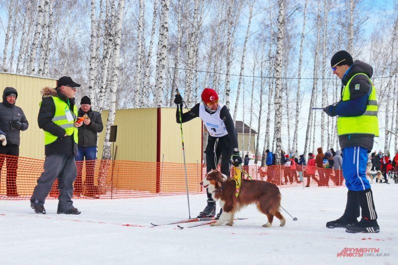 Первыми на старт вышли лыжники с собаками - эта дисциплина называется скиджоринг.