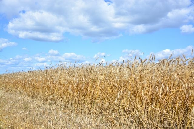 Фермерам Хабаровского края дадут 164 млн рублей на развитие хозяйств.