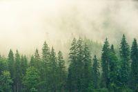 Депутаты считают, что вокруг Уптара и так много леса.