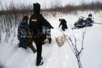 Ямалец украл и убил 20 оленей
