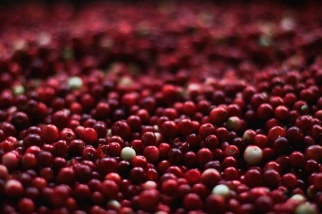 Четыре тонны тюменских ягод отправили в Казахстан