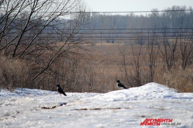 МЧС: на Оренбуржье обрушится сильный ветер