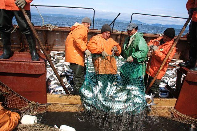 Сберечь лосося. Число рыболовных участков в Хабкрае сократят.