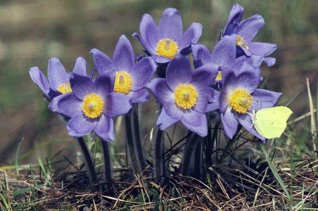 Прогноз погоды на 13 марта: осадки на территории Украины не ожидаются, будет ясно и солнечно.