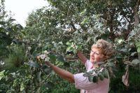 В центре Челябинска планируется высаживать красиво цветущие плодовые деревья.
