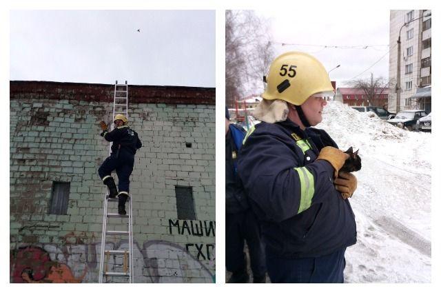 Котёнок чудом забрался на девятиметровое здание, но не смог спуститься вниз сам.