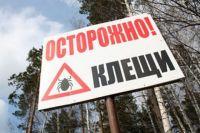 В прошлом году из 19 тысяч укушенных в Челябинской области, только у 75 энцефалит.