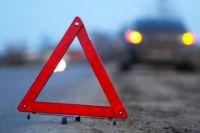 За два месяца на дорогах Украины случились 39 наездов авто на домашних животных.