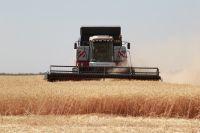 Помощь растениеводы смогут получить только для покупки семян, отвечающих ГОСТам, но таких в области немного больше трети.