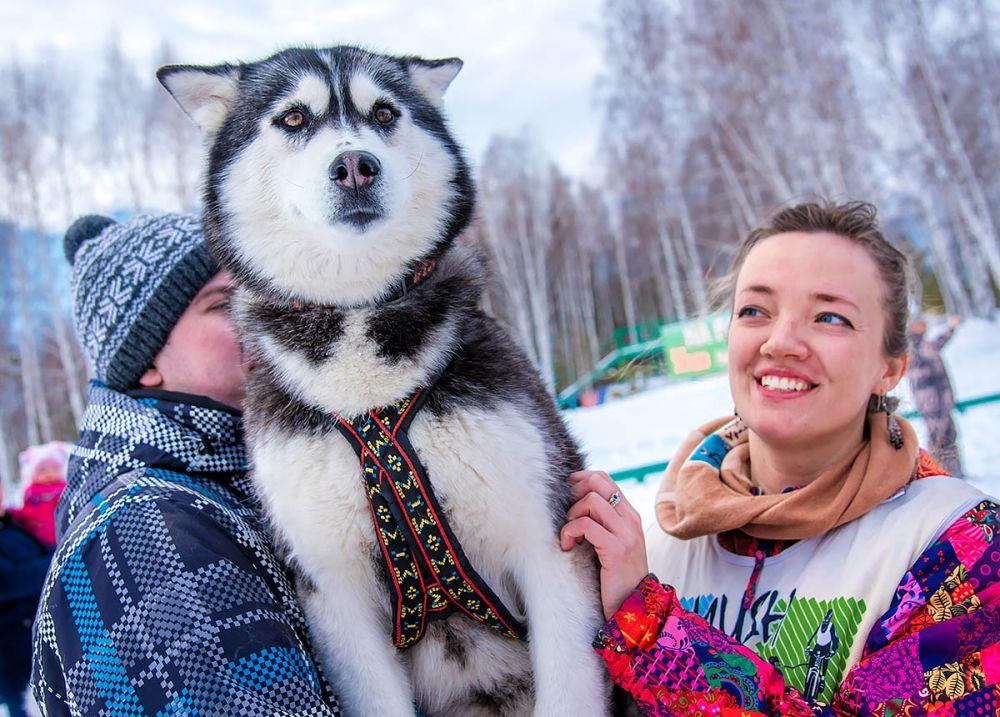Упряжки из 6 собак. 1 место - Евгения Филатова (Челябинск)