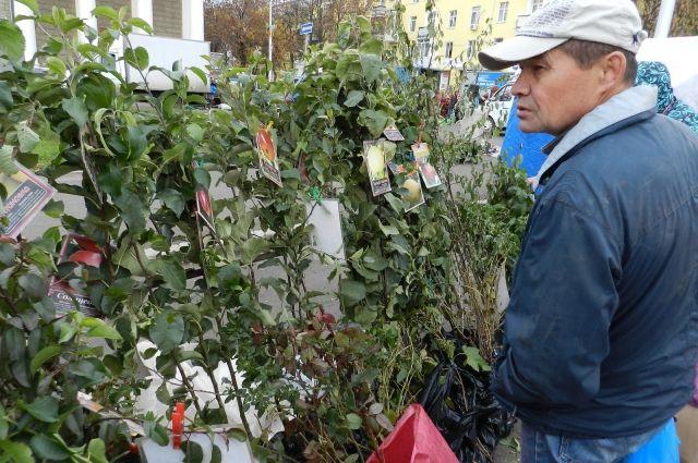 В Оренбуржье не пустили 360 тыс. саженцев из Кыргызстана и  Казахстана