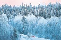 Соотношение выбросов СО2 в России и его поглощения лесами примерно такое, как на этой дороге.
