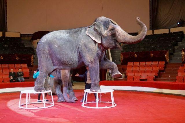 В Киеве окончательно ввели запрет на передвижные цирки с животными