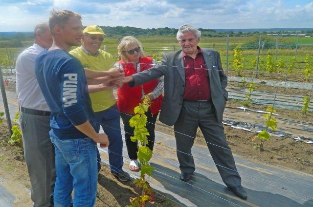В социальной деревне САЛЕМ студенты выращивают виноград