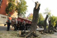 За весенний период в Иркутске будет проведена формовочная обрезка 677 крупномерных деревьев.