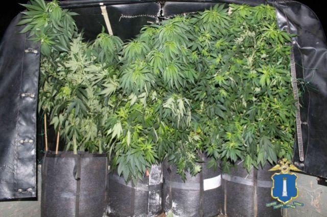 Ульяновск конопли ферма марихуана игра