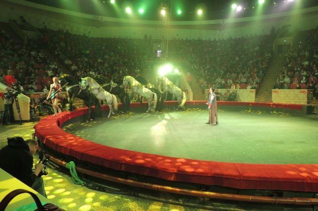 У лошадей есть строгая иерархия.