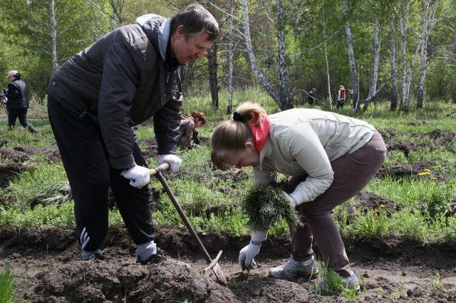 Работы на садовом участке - процесс постоянный за исключением зимы.