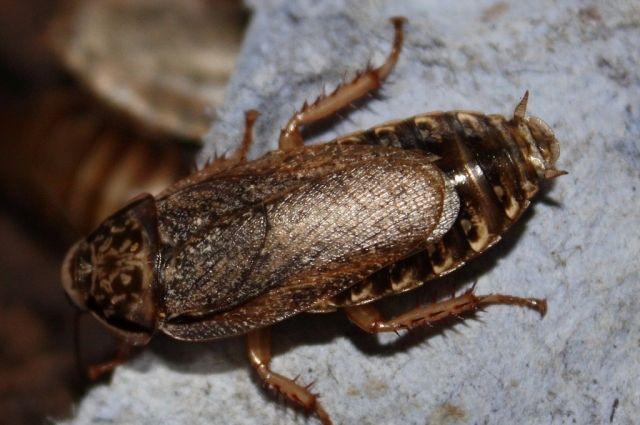 Антисанитарию и насекомых обнаружила прокуратура в колонии под Хабаровском.