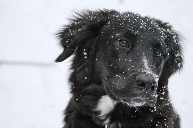 В Омске появился пункт сбора корма для бездомных собак