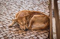 Бездомных животных вакцинируют, стерилизуют и выпускают обратно на улицу