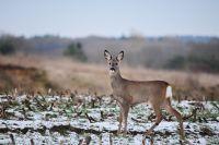 Для охоты мужчина использовал собак, которых натравливал на увязавших в снегу животных, после чего разделывал туши.