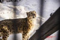 Такая акция для Новосибирского зоопарка имени Р.А. Шило уже стала доброй традицией.