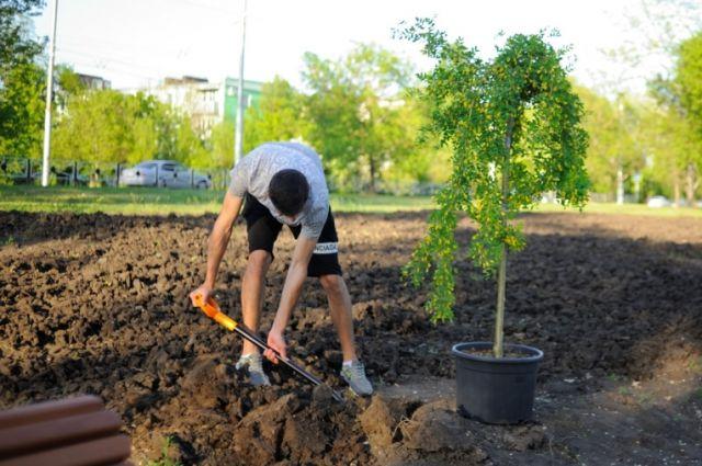 Тюменские подростки представят проекты озеленения школьных дворов