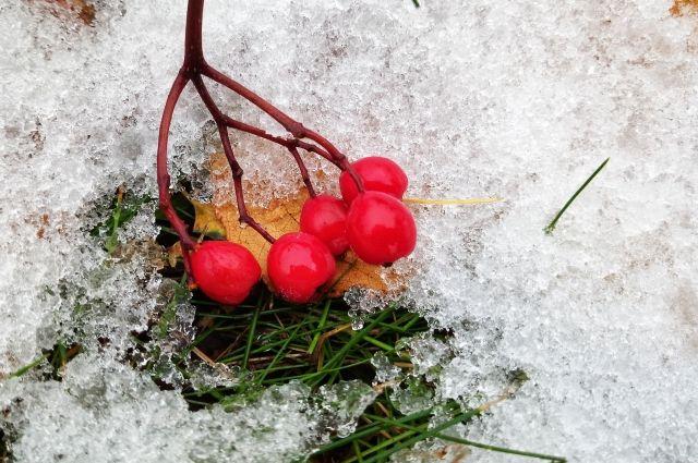 Синоптики уже с завтрашнего дня обещают киевлянам мороз и холодную погоду.