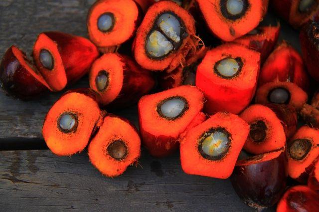 Пальмовое масло получают из плодов масличной пальмы, растение может плодоносить до 4 раз в год.