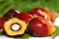 Эксперты Роскачества изучили биологические свойства пальмового масла
