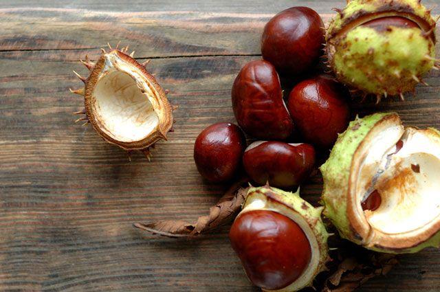 Зеленоградский питомник дарит саженцы каштана, дуба и кедра