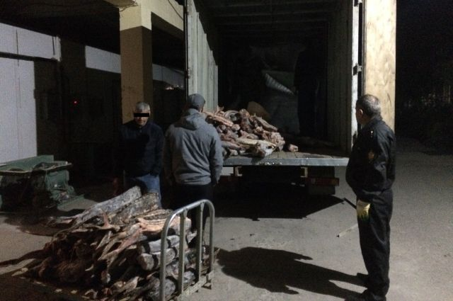 Преступная группа незаконно выловила около 7 тонн осетра в Хабкрае.
