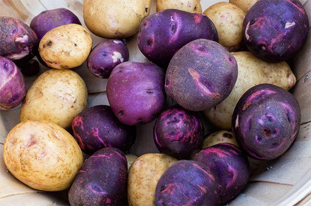 Какого цвета картошка лучше?