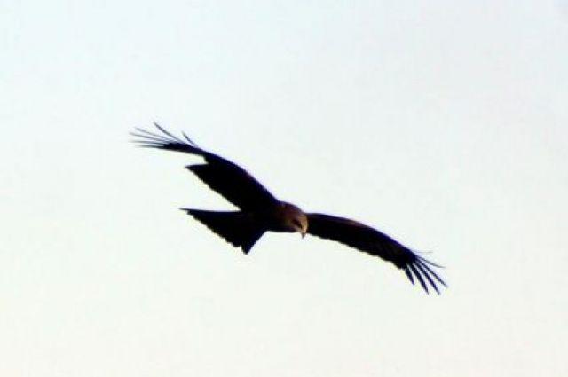 Птицы криками оповещали о своем прибытии.