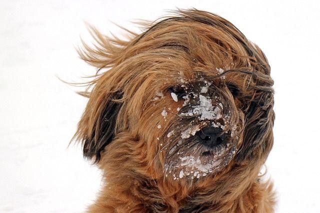 Суббота и утро воскресенья будут снежными и ветреными.