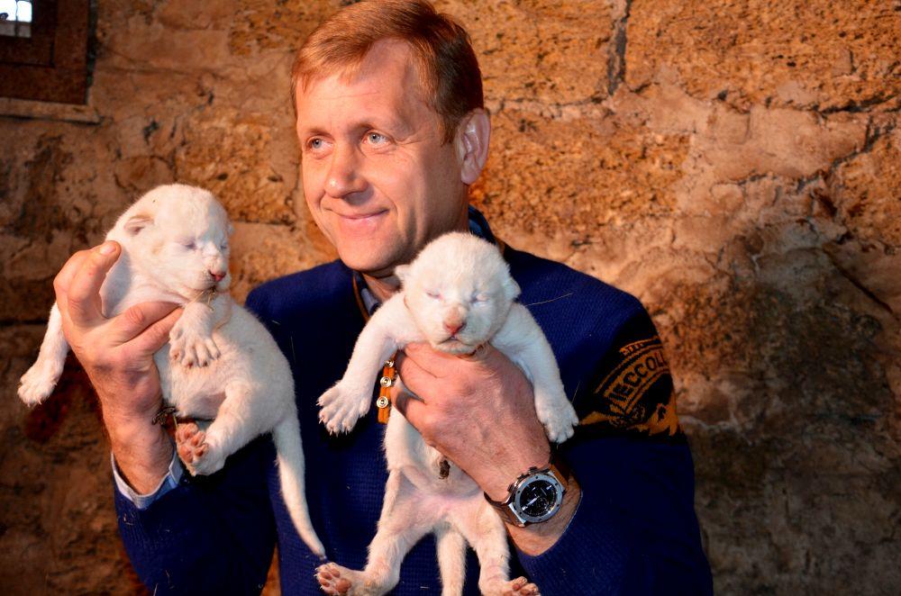 Владелец парка Олег Зубков: «появление на свет белых львят — большая радость»
