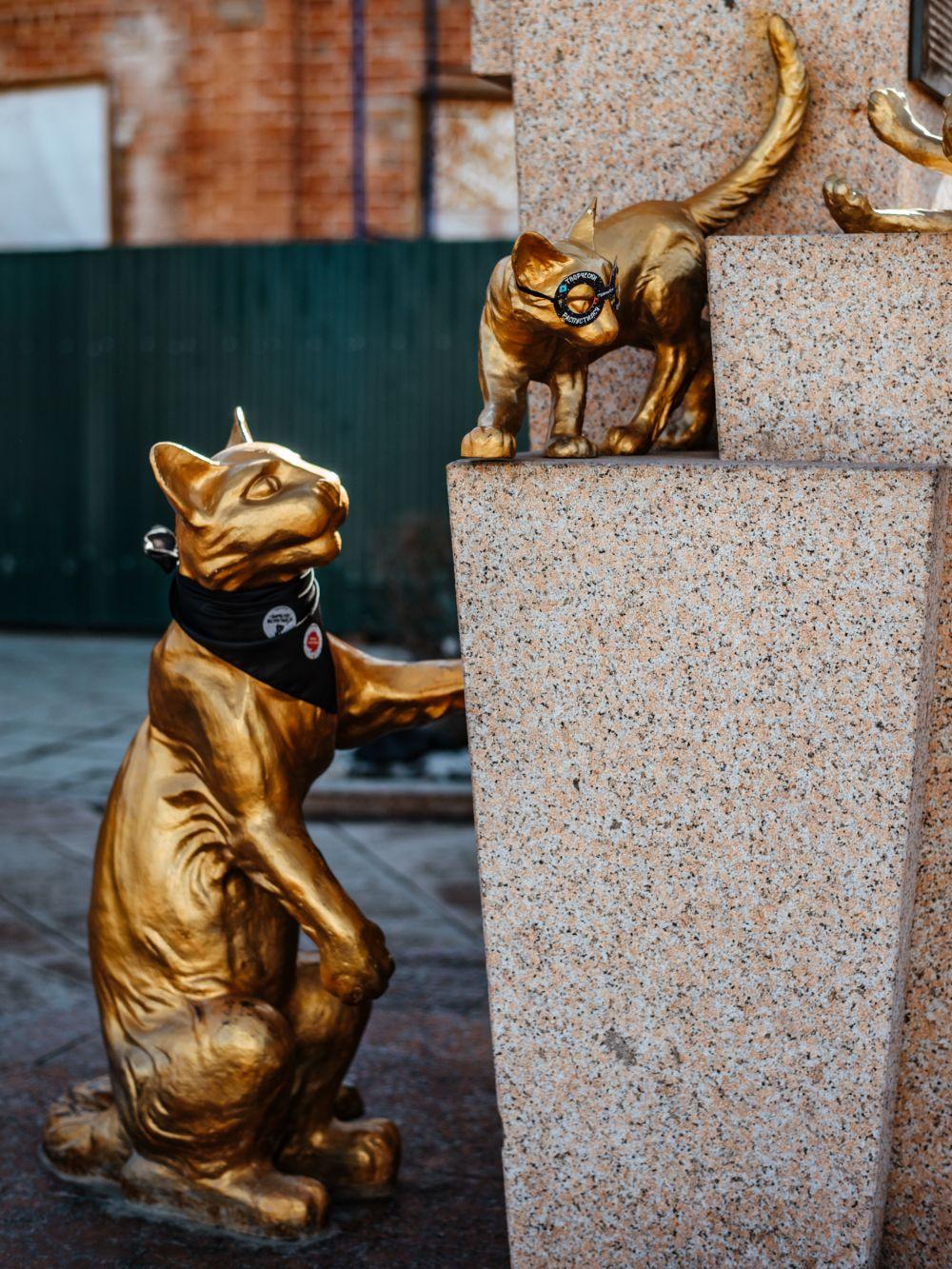 Сквер сибирских кошек, промоакция. Тюмень, 2019.