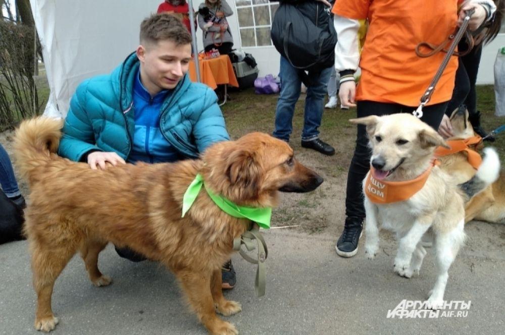 Пришли на фестиваль и те, кому уже посчастливилось взять животное из приюта