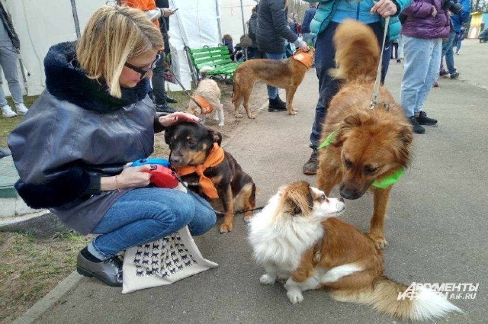 Будущие владельцы могли познакомиться с собаками