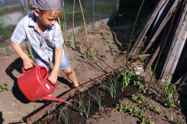 Урожайность зависит от правильного полива.