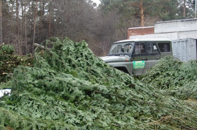 Ущерб кузбасским лесам составил 13 000 рублей.