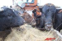 Источник болезни - больные и переболевшие животные.