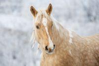 Лошади объели елки на улице Фабричной